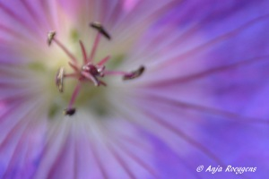 Flowers (16)