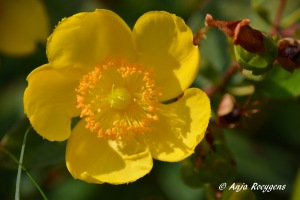 Flowers(16)